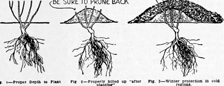 be sure to prune back.jpg
